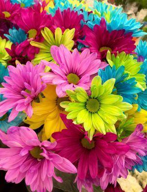 flowers colorful bloom daisies 70330